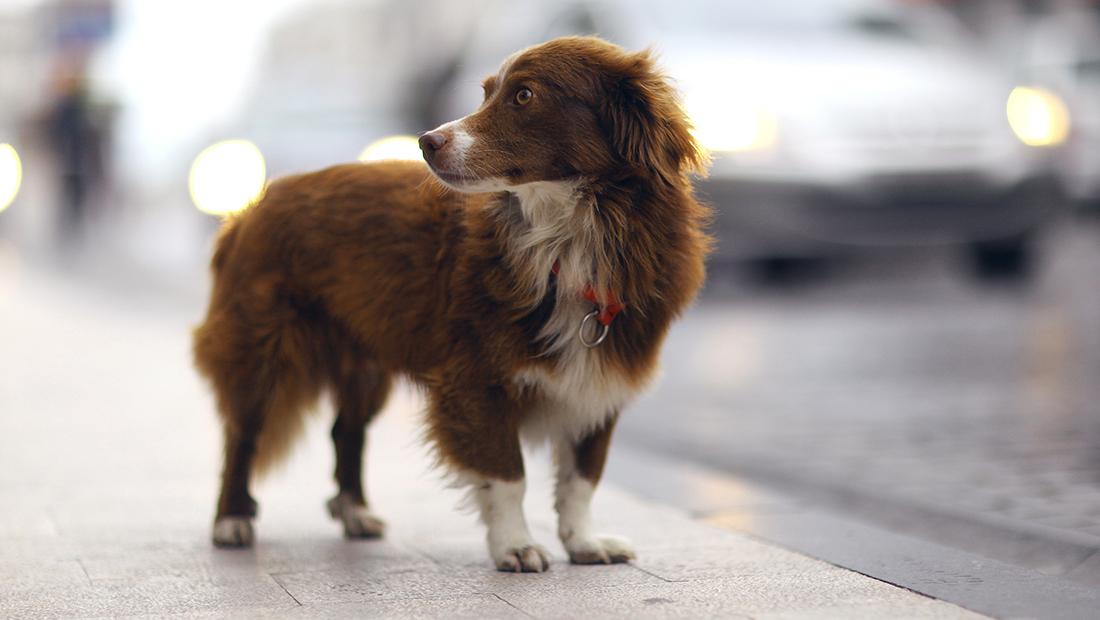 perro solo en la calle