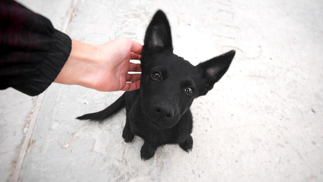 persona acariciando a perro perdido