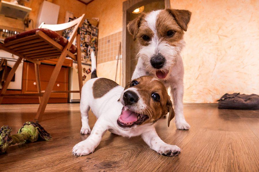cachorros jugando