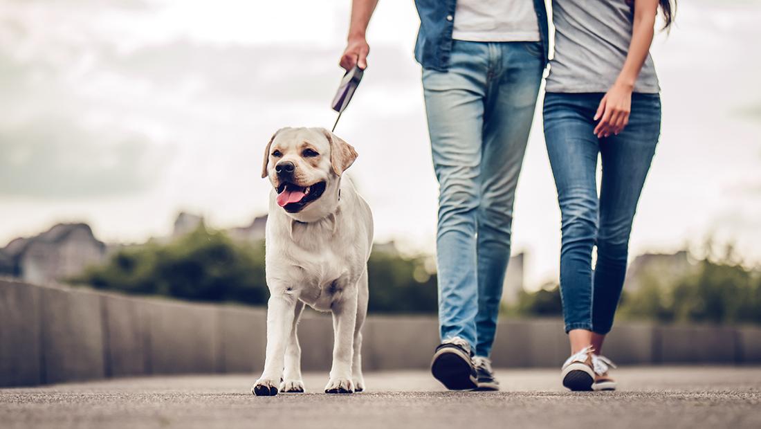 perro paseando con sus dueños
