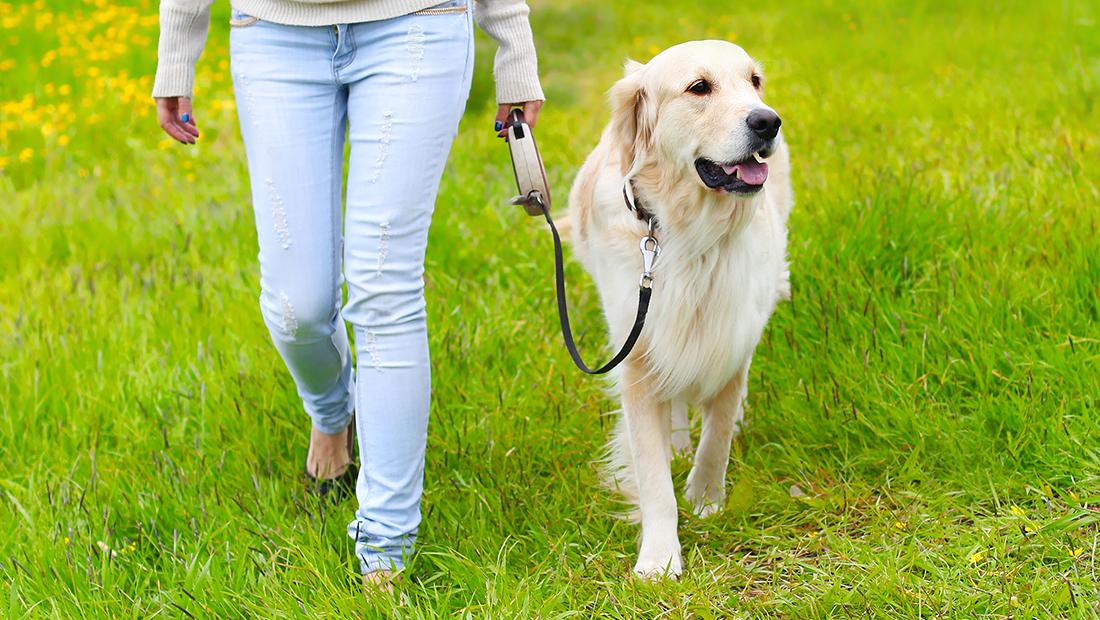 dueño paseando con su perro