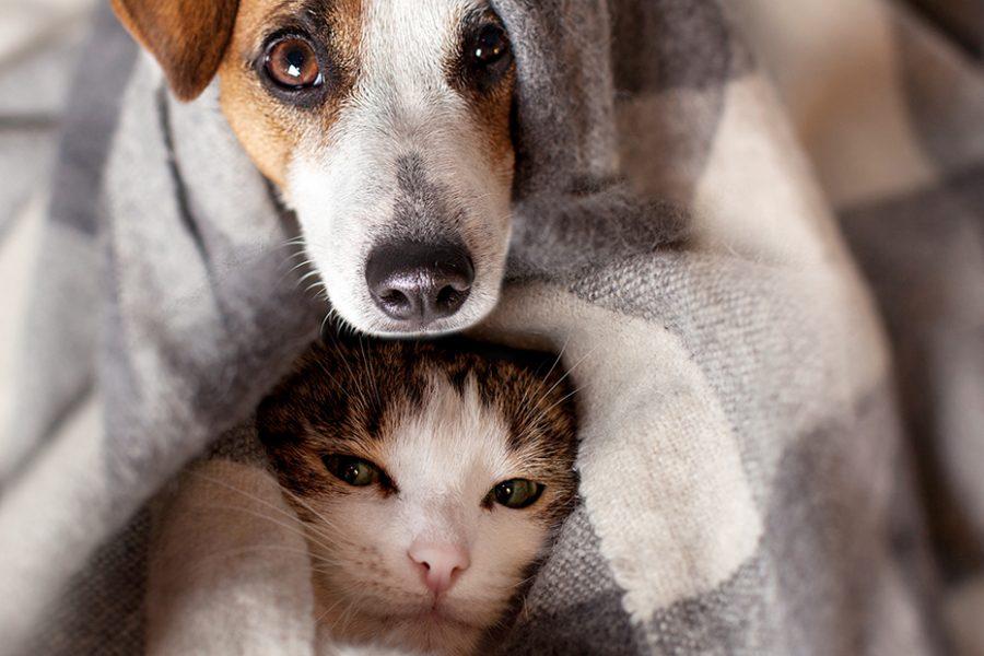 perro y gato jugando