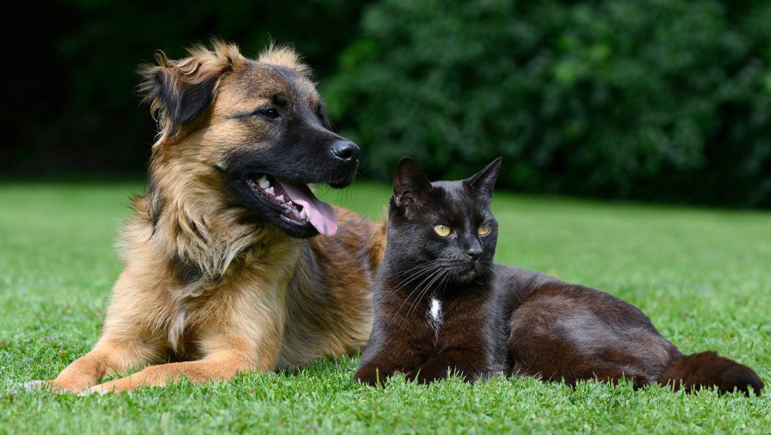 perro y gato en el parque