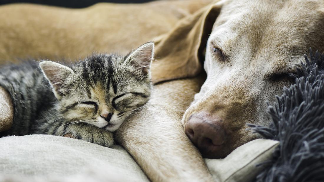 gato y perro dormidos