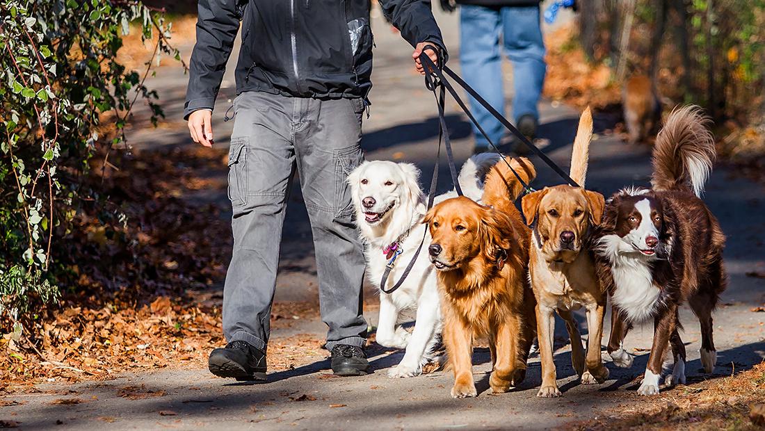 dueño paseando a perros