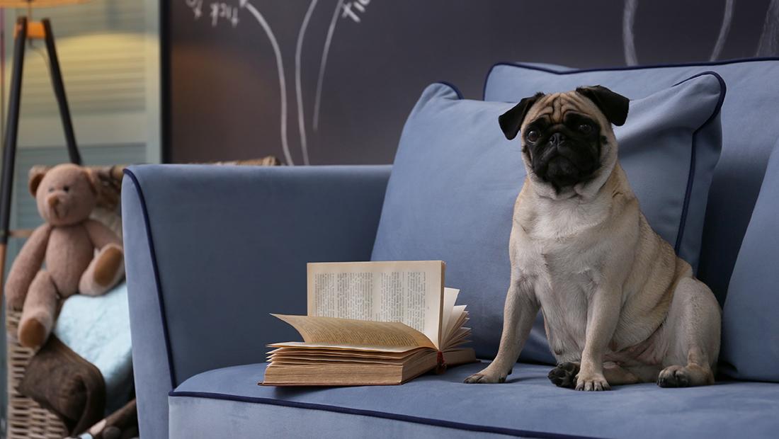 perro sentado en el sillón
