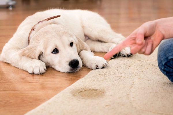 dueño regañando a perro