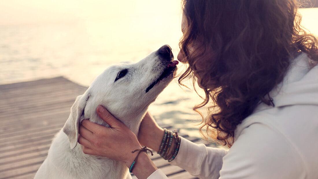 perro besando a su dueño
