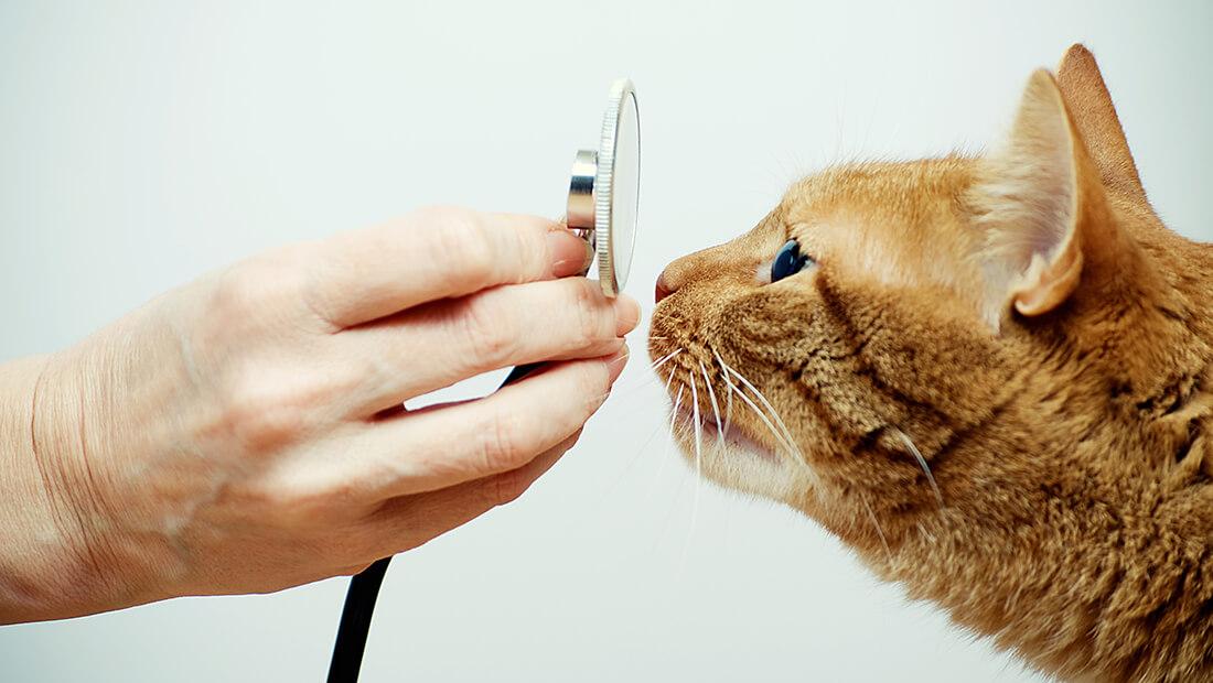 doctor revisando a gato