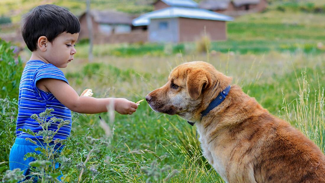 niño dándole de comer a perro