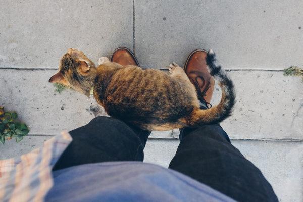 gato acariciando a su dueño