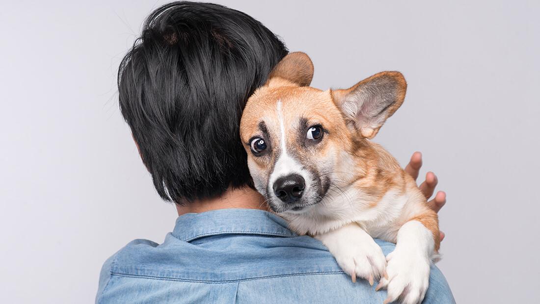 dueño cargando a su perro