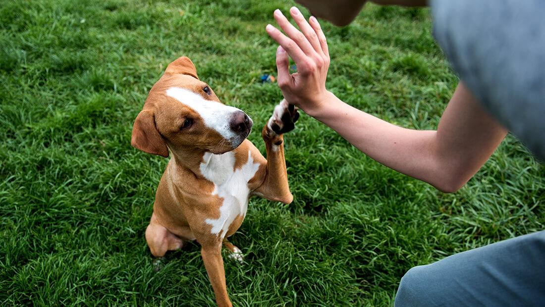 perro saludando a su dueño