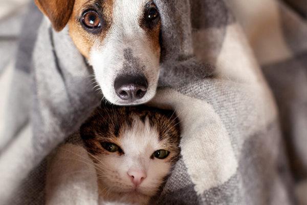perro y gato tapados