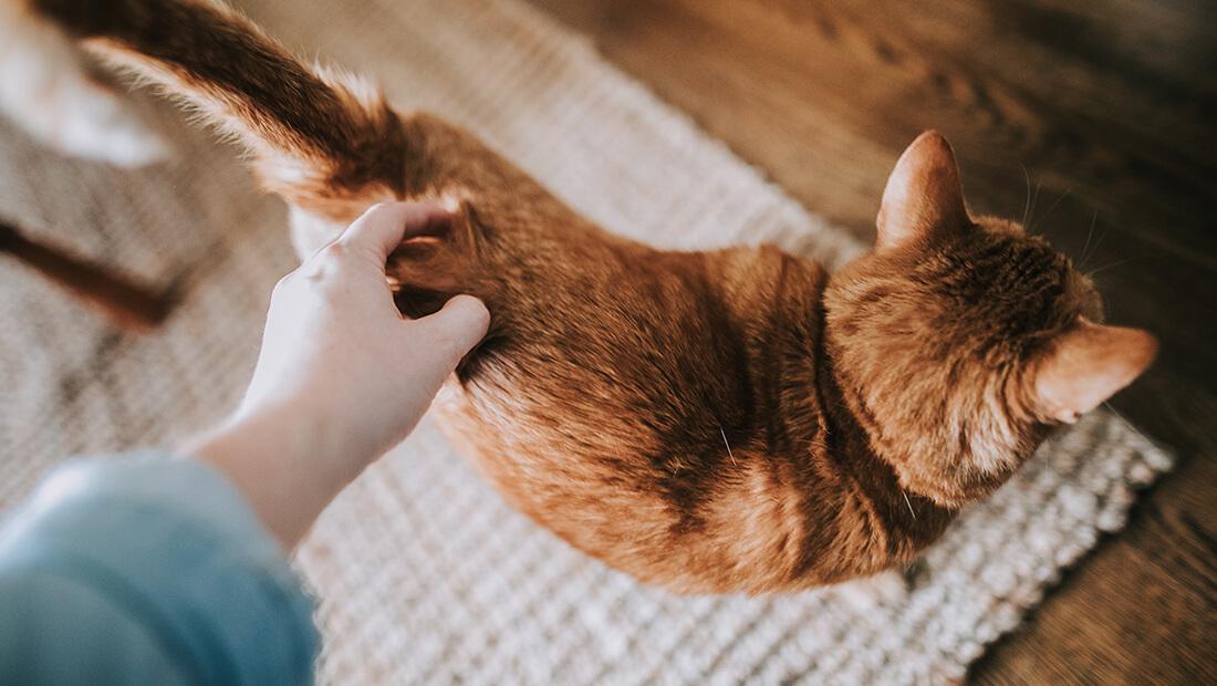 gato acariciando a su gato