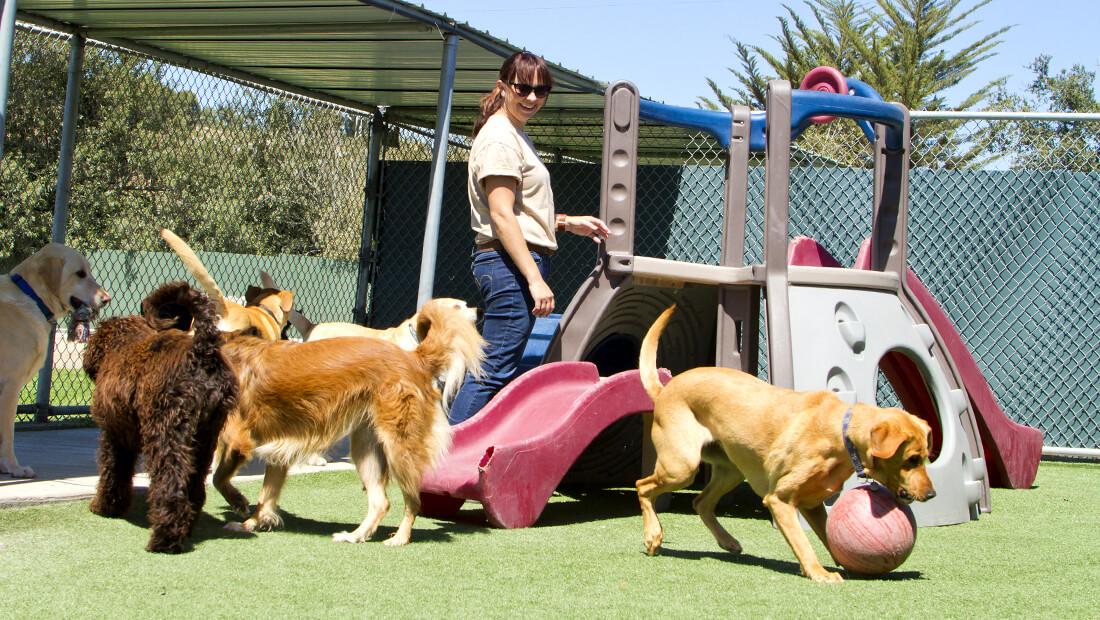 perros jugando en guardería