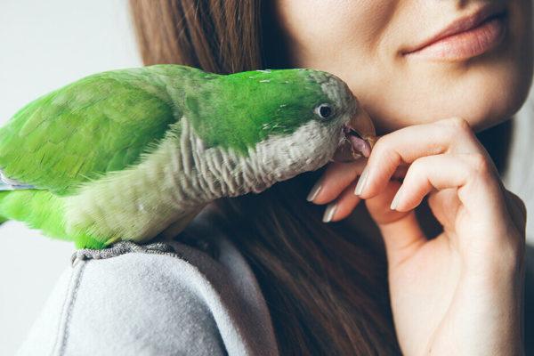 dueño alimentando a pájaro