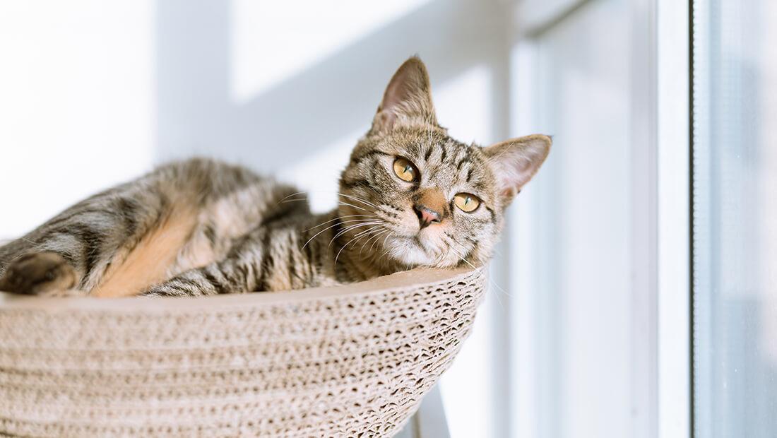 gato acostado su cama