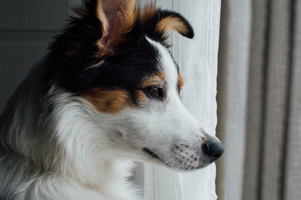 border colme viendo en la ventana