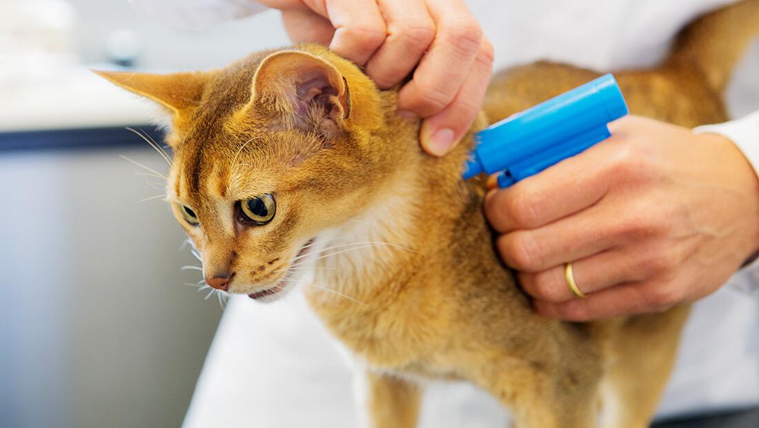 doctor inyectando a gato