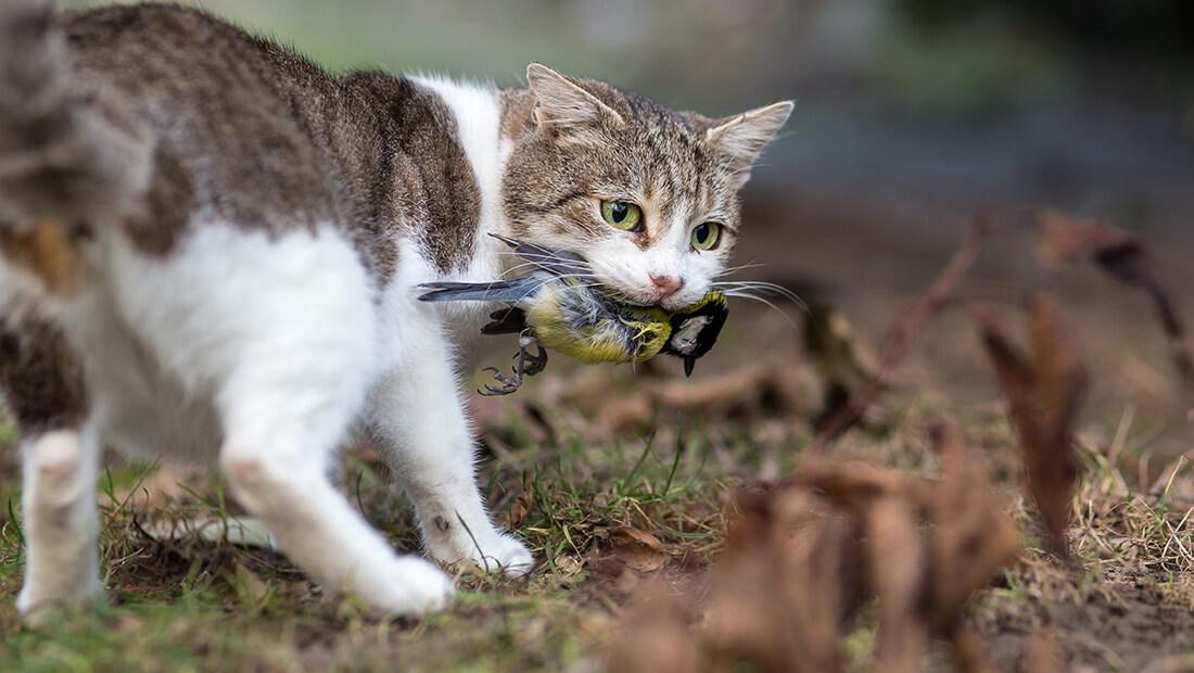 gato atrapando un ave