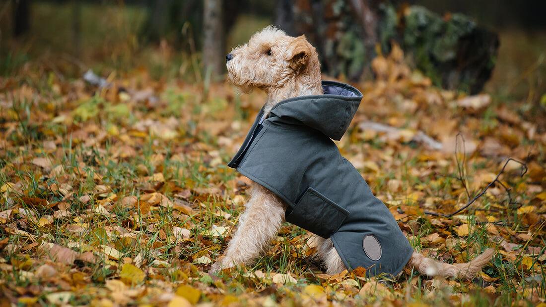 perro con impermeable