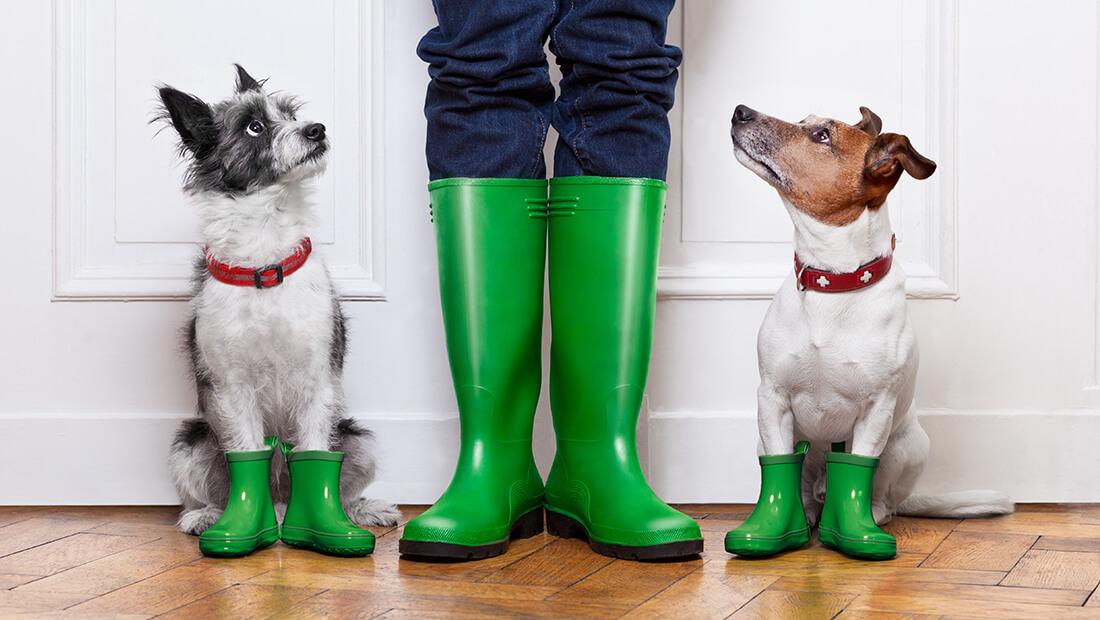 perros con bota de lluvia