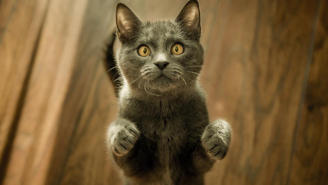 ¿Se debe de cortar las uñas a los gatos?