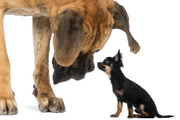 perro grande mirando a una perro pequeño