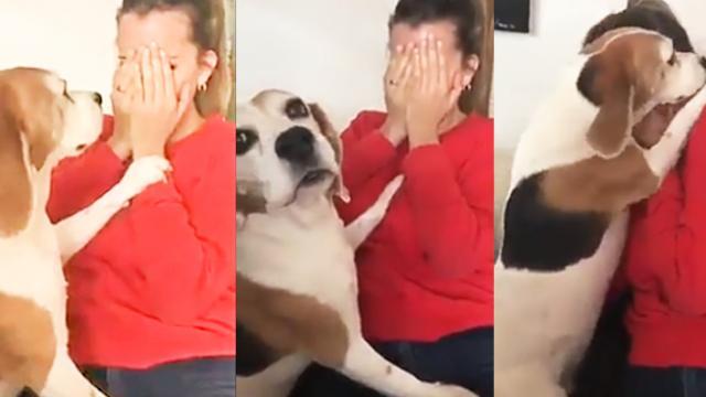 beagle con su dueña
