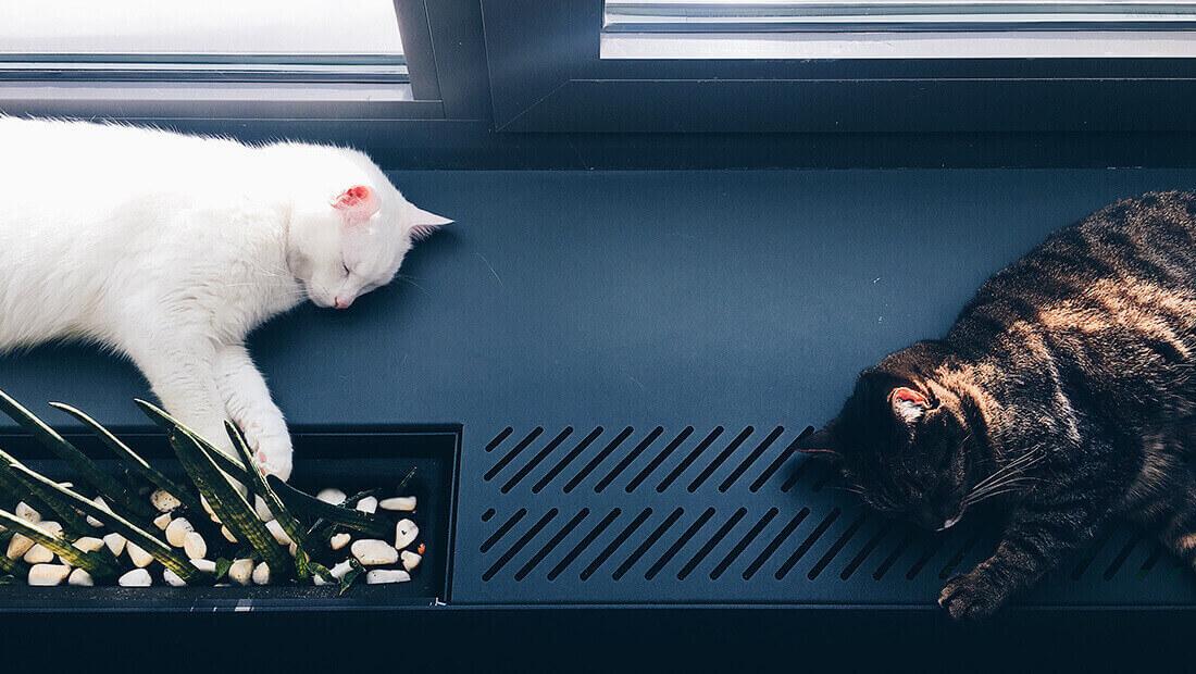 dos gatos acostados