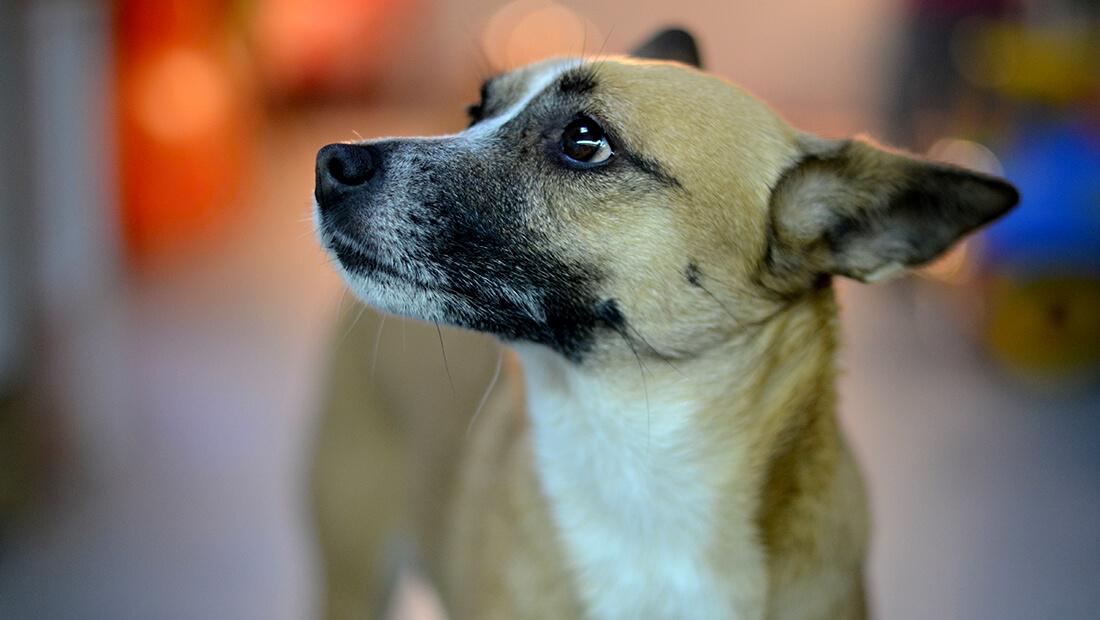 adopción de perros