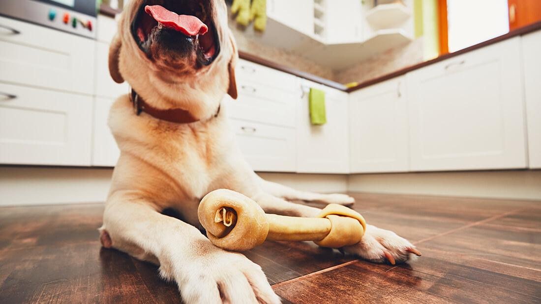 perro con hueso de carnaza