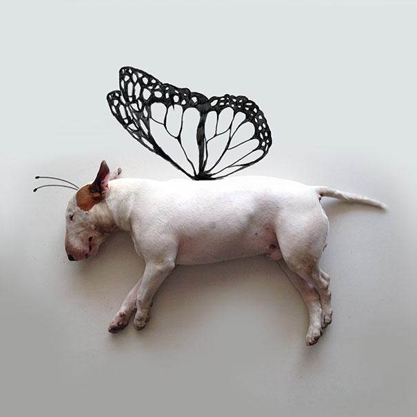 bull terrier con alas de mariposa