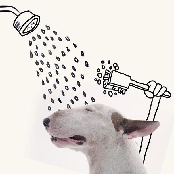bull terrier bañándose