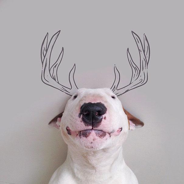 Bull terrier con cuernos