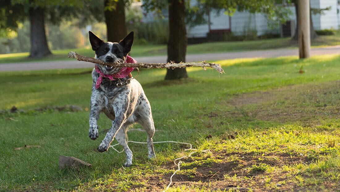 perro corriendo en el parque