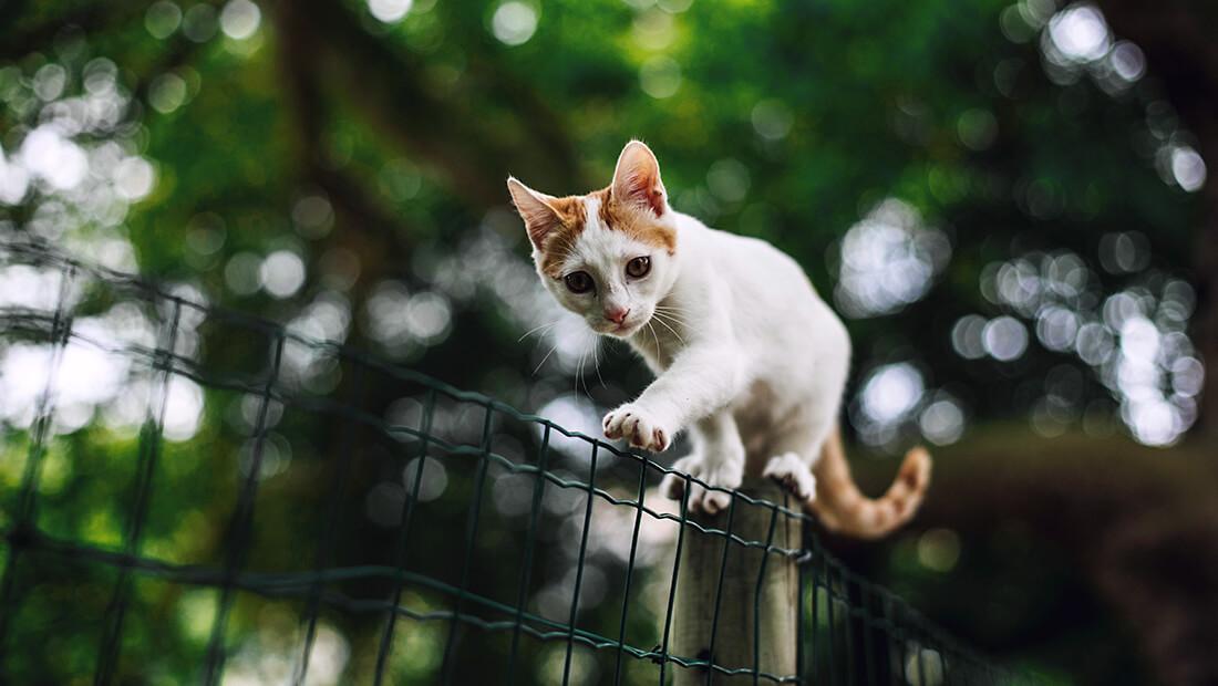 nuestro gato no regresa