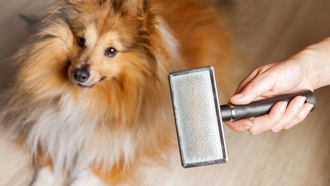 dueño cepillando a su perro