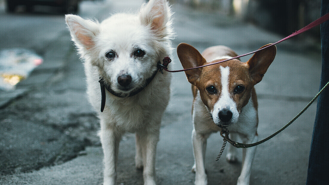 perros paseando con correa
