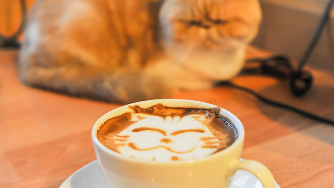 café de gato