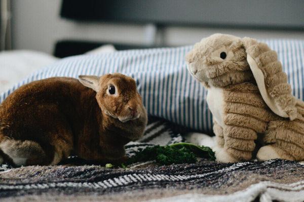 conejo en casa