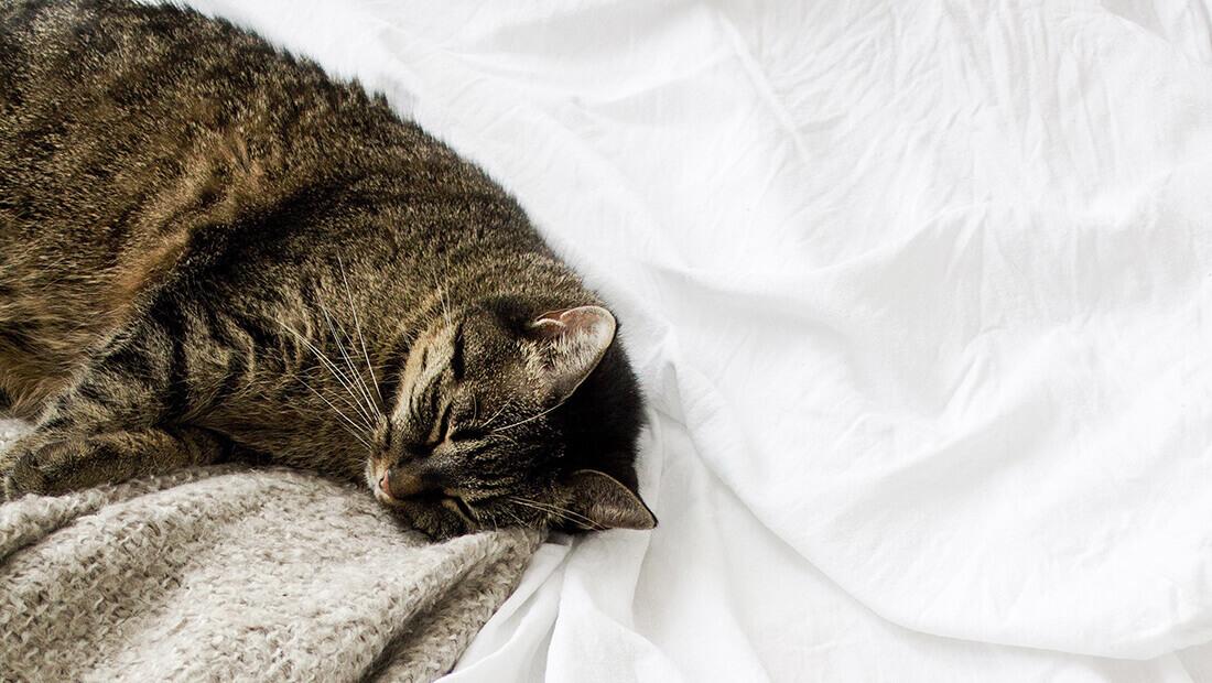 gato acostado en una cama