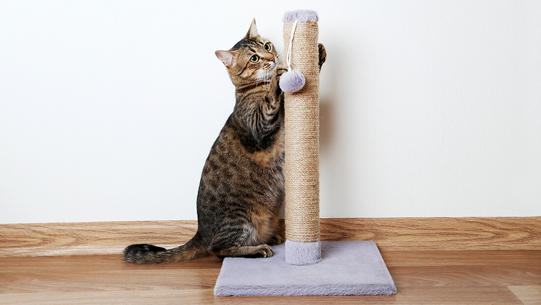 gato jugando con su rascador