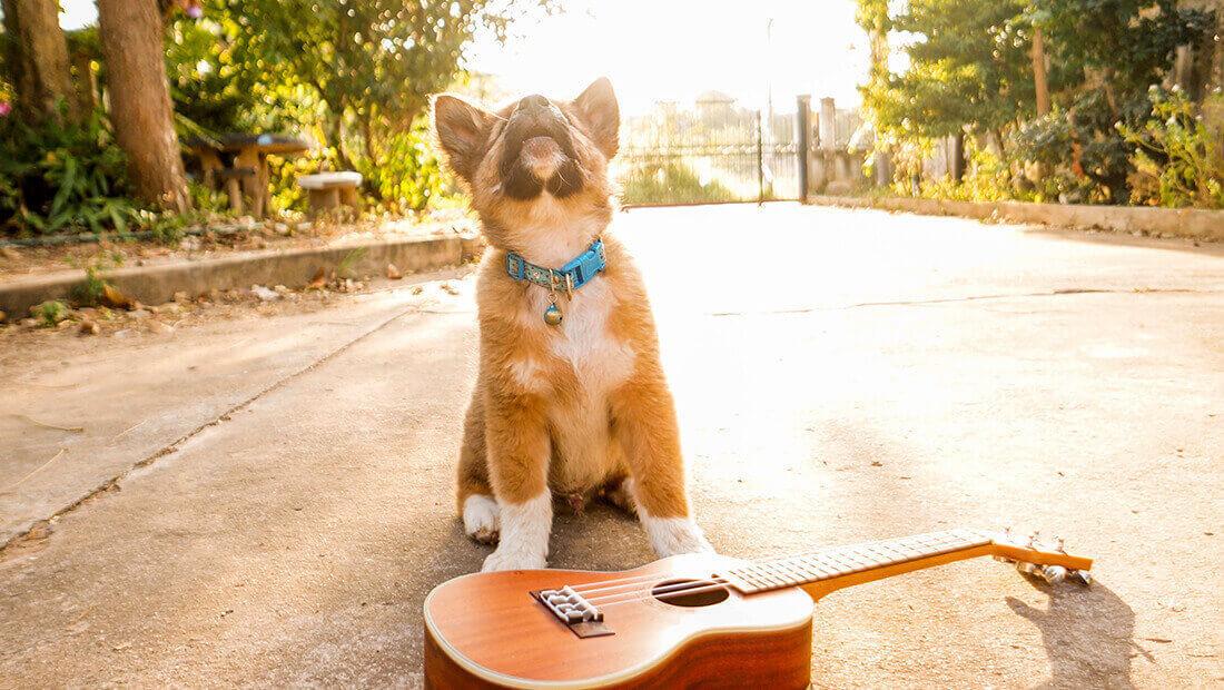 perro cantando con guitarra