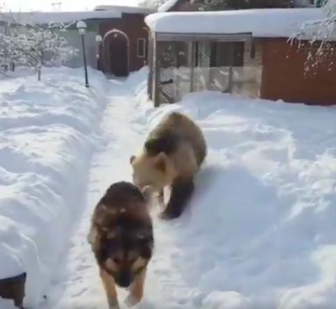 oso jugando con perro en la nieve