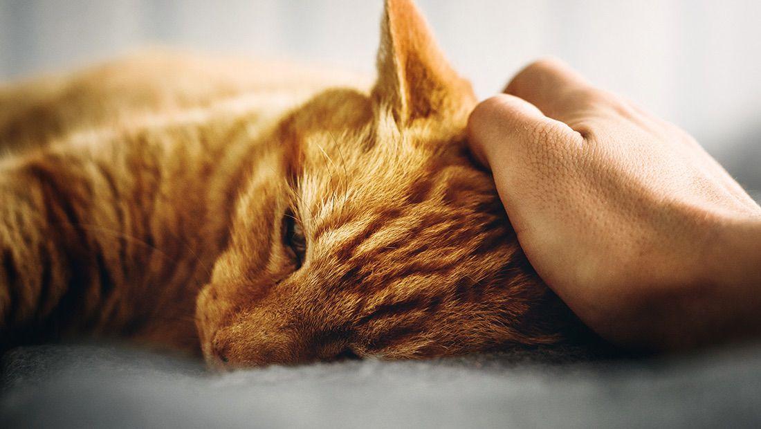 dueño acariciando a su gato