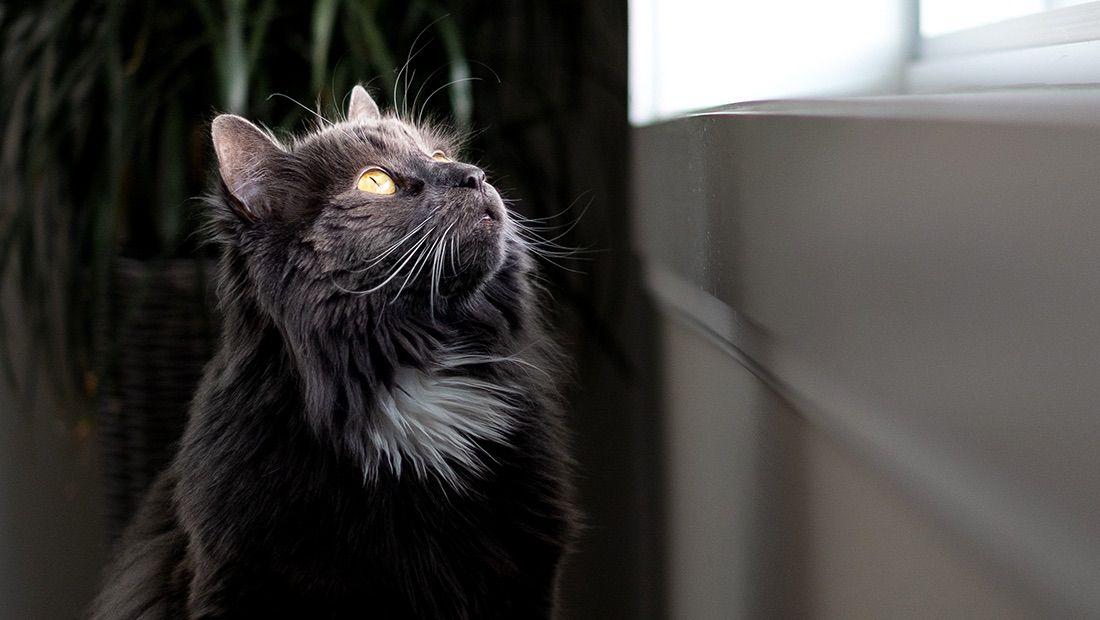 gato viendo la ventana