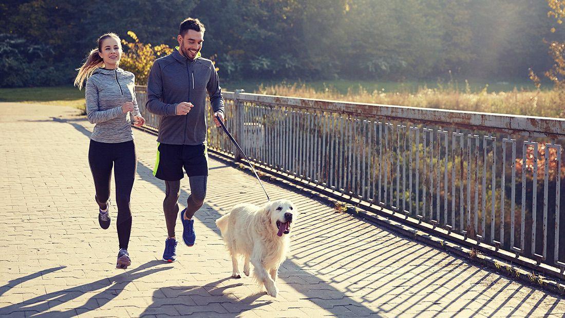 perro corriendo con sus dueños