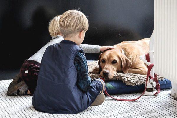 creer con un perro